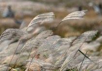 Выращивать в Московской области богатое целлюлозой тропическое растение мискантус и производить из него одноразовую посуду и вискозную ткань научились российские ученые