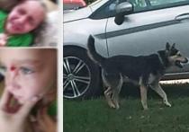СК проверит информацию о нападении бездомной собаки на ребенка под Рязанью