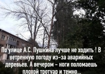 Рязанка пожаловалась на сухие деревья на улице Пушкина