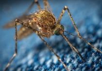 Новая смертельная лихорадка в Индии заставила россиян напугаться комаров