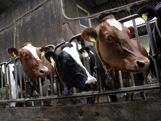 Новый резидент ТОСЭР «Володарск» создаст производство кормовых добавок