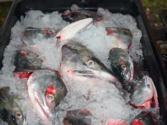 В Корсакове разобрали 400 килограммов рыбных голов