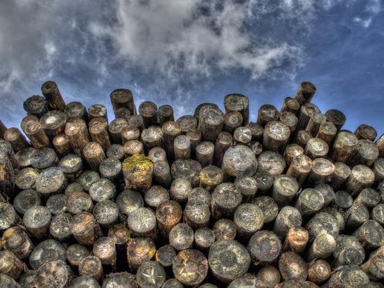 В Корниловском лесничестве под Томском обнаружили незаконную вырубку