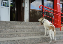 Войну магазинам, которые пускают к себе собак, готовы объявить зоозащитники