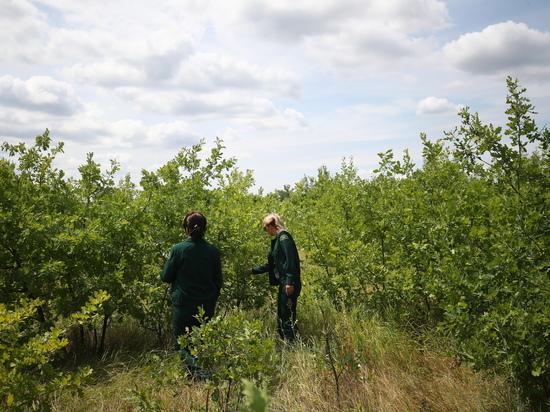 В Волгоградской области готовят 30 га лесного фонда для высадки деревьев