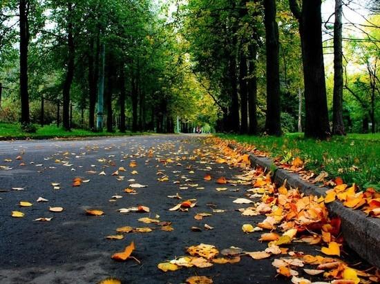 Курские синоптики обещают 3 сентября в регионе дожди и +17 градусов