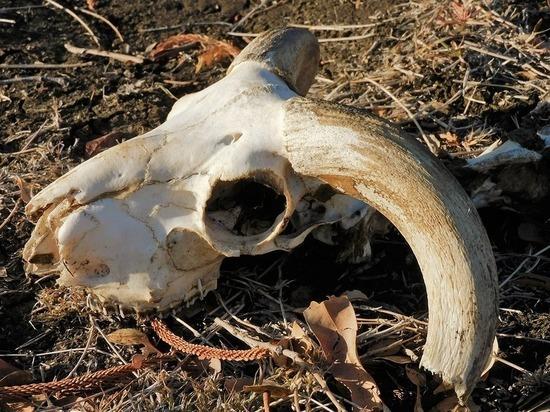 В Кузбассе на скотомогильниках с сибирской язвой обнаружили опасные нарушения