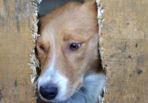В Астрахани очень остро стоит вопрос с бездомными собаками