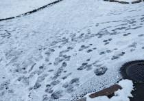 Эксперт рассказала, когда в Псковской области выпадет первый снег