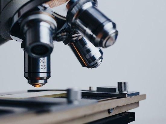 В Новосибирске ученые создали новую тест-систему на антитела к вирусам