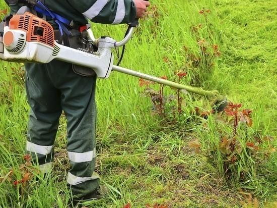 Курские управляющие компании получили 10 уведомлений за нескошенную траву