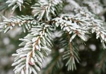В Калужской области ожидаются заморозки