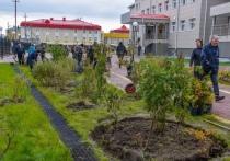 Название для аллеи из диковинных деревьев придумают жители Ямальского района