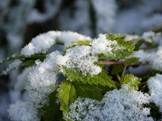 В двух регионах около Новосибирской области выпал первый снег