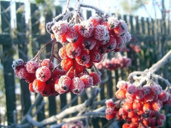 В Курской области ночью 7 сентября синоптики обещают заморозки до -2 градусов