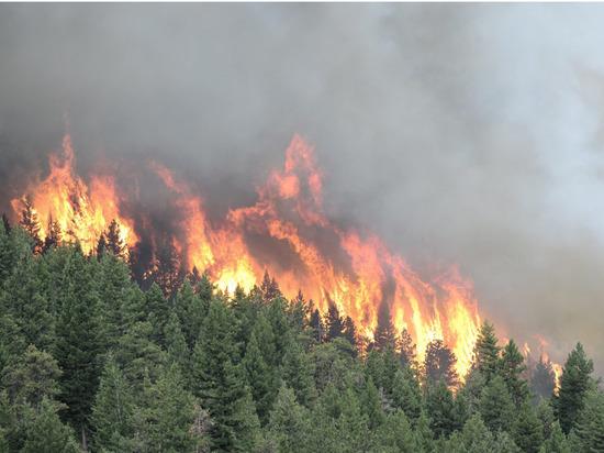 В Якутии площадь пожаров уменьшилась в 1,5 раза