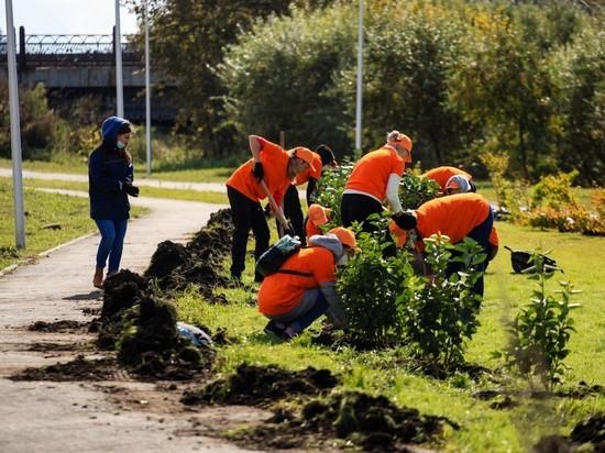 Волонтеры убирали мусор и высаживали деревья в трех городах региона