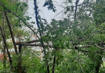 Рязанка пожаловалась на упавшее дерево на стадионе школы №36
