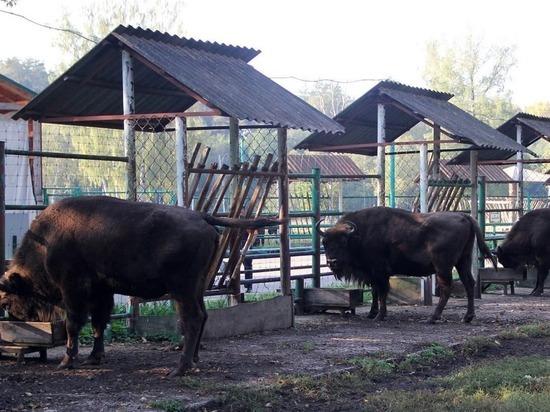 Ценители природы из Хакасии помогли заповеднику Серпухова