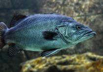 Лекарство для рыб из