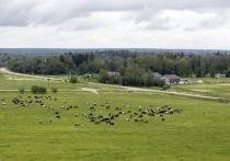 Речь идет об участках до 10 гектаров