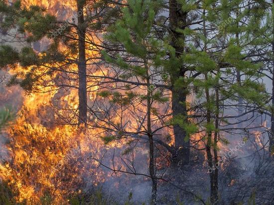 В Якутии за сутки потушили четыре природных пожара