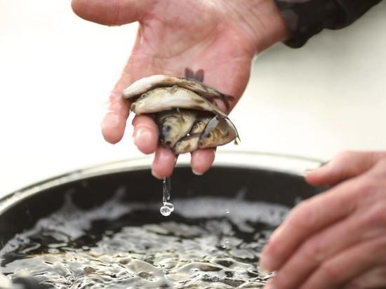 Астраханец устроил массовую гибель рыбы из-за насоса