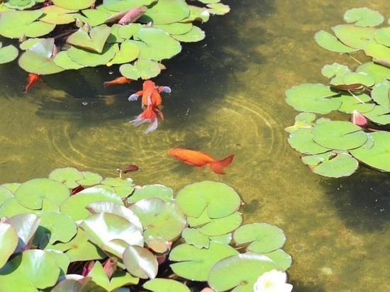 На железноводском озере «30'Ка» появится Fish-парк