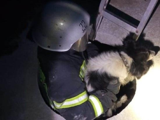 Белгородские спасатели помогли провалившейся в люк собаке