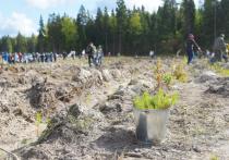 В Подмосковье стартует традиционная акция  по посадке деревьев