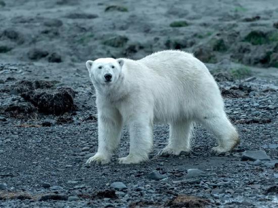 Алтайский фотограф-путешественник рассказал о поездке в Арктику