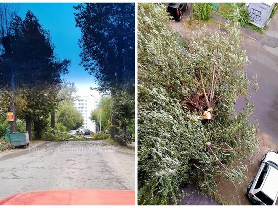 В Томске ураганный ветер повалил деревья и повредил линии электропередач