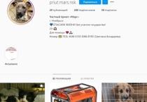 Злоумышленники, которые в Instagram выдают себя за волонтеров приюта для бездомных животных, снова переименовали свой аккаунт и сейчас собирают деньги от имени частного приюта Ноябрьска, которого на самом деле не существует