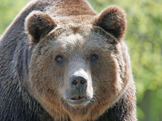 Ночью жителей кузбасского города напугал медведь