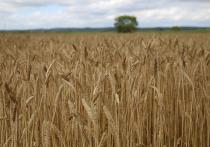 Большое сельскохозяйственное мероприятие – Приморский день поля анонсировали в краевом правительстве