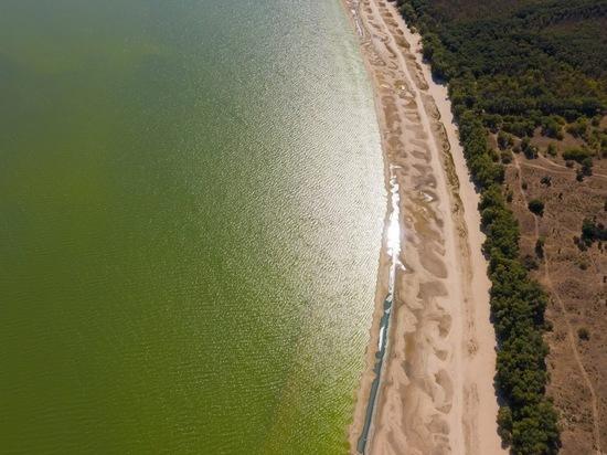 Хлорелла будет чистить волгоградские водоемы от синезеленых водорослей