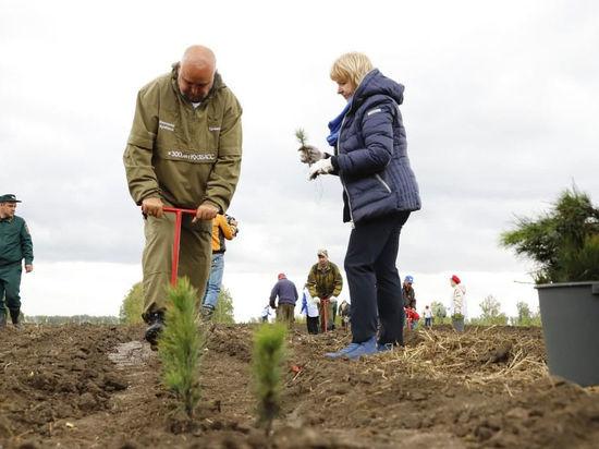 Губернатор Кузбасса поучаствовал в массовой посадке деревьев в Чебулинском районе