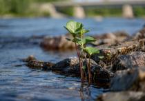Переход на «зеленое» развитие и достижение минимального выброса парниковых газов обсудили на Ямале
