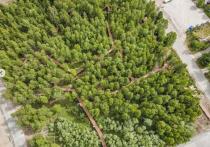 Смородина, малина и барбарис: первый в Арктике плодовый сад высадят в Тарко-Сале