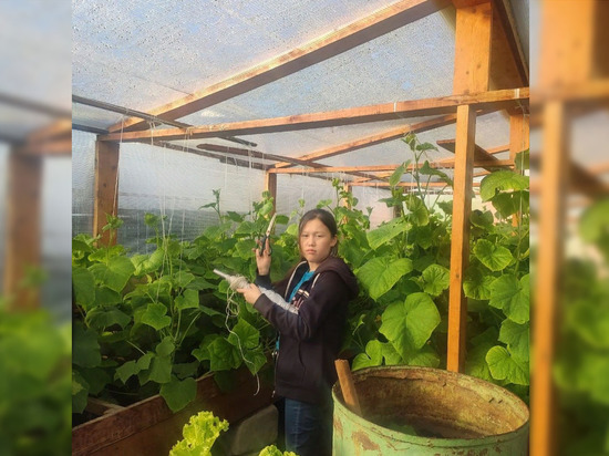На севере Якутии выращивают свежие овощи