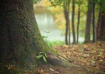 Депутаты ЗСК рассмотрят возможность создания «Лесного кодекса» в Краснодарском крае