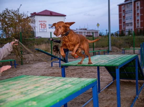 Снаряды для занятий и лавочки для отдыха: кинолог положительно оценил новую площадку для выгула собак в Салехарде