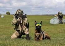 Служебные собаки прыгали в Серпухове с парашютами