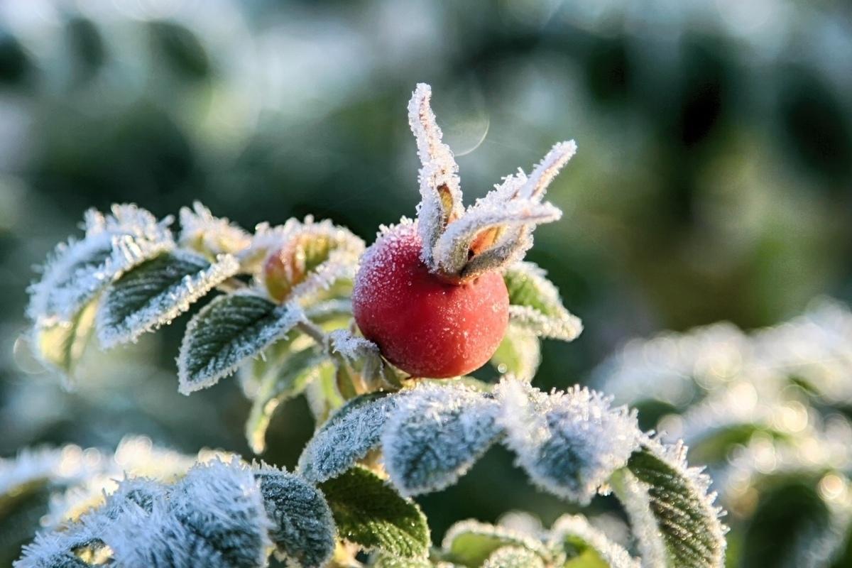 Костромичам пообещали одновременно теплые выходные и заморозки