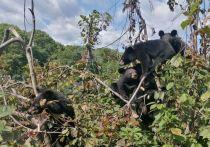 Несколько месяцев неравнодушные приморцы следили за судьбой шестерых гималайским медвежат, нашедших приют в центре помощи диким животным «Тигр»