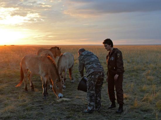 В Хакасии создадут центр восстановления популяции лошади Пржевальского