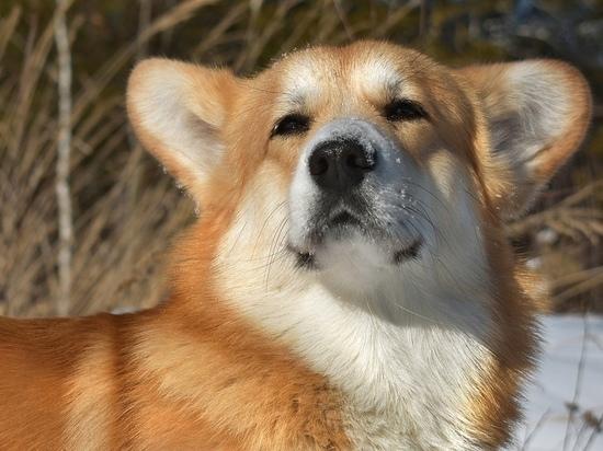 Под Рязанью поисковый пес нашел заблудившуюся в лесу пенсионерку