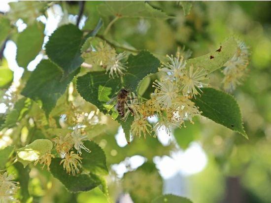 Пчеловодов Башкирии поддержали грантами