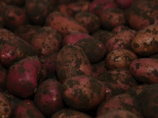 В Волгоградской области пенсионерка заявила в полицию о краже картошки