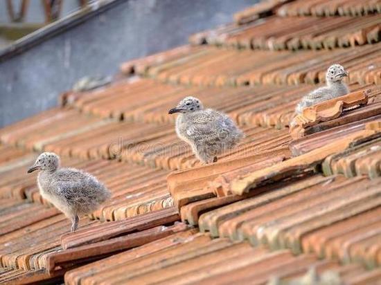 Орнитолог: Крыши домов Магадана усеяны гнездами чаек